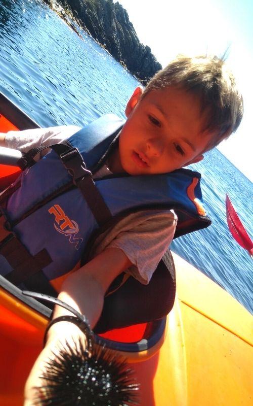 découverte de la faune marine en kayak de mer.